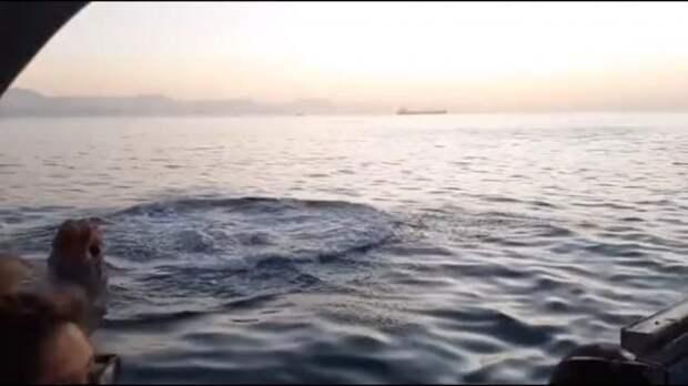 Морской котик выпрыгнул прямо перед акулой