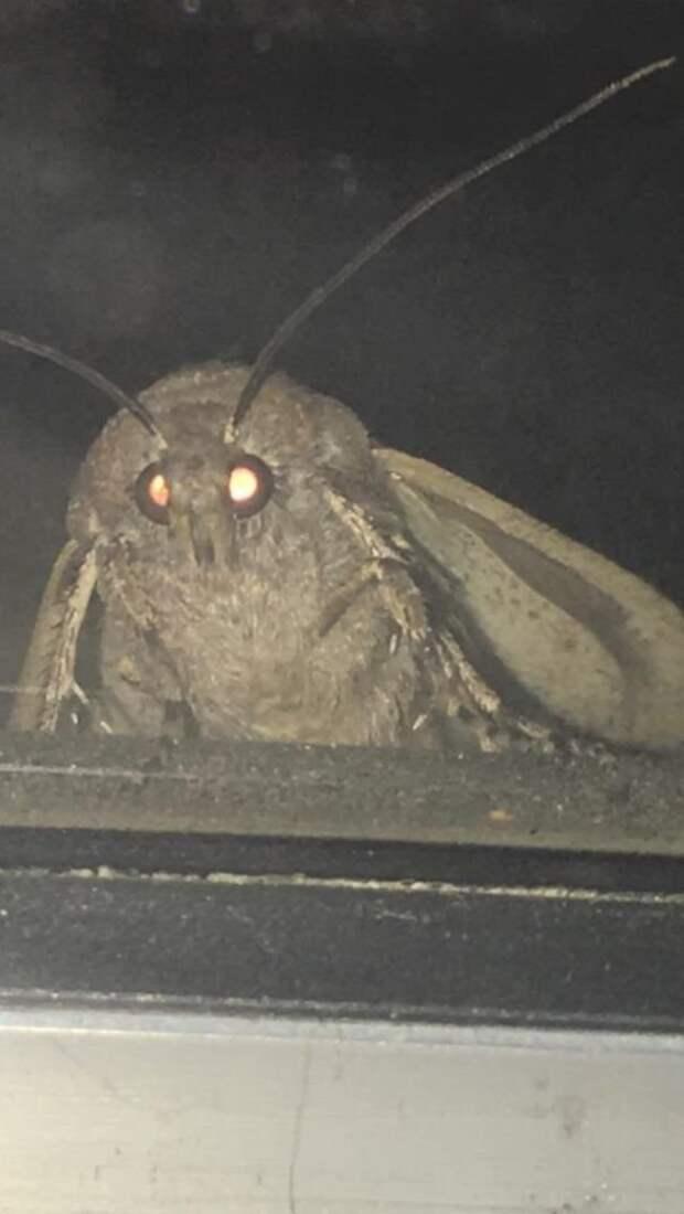 48. Увеличенный снимок мотылька животные, мир, подборка, природа, ужас, фото, явление