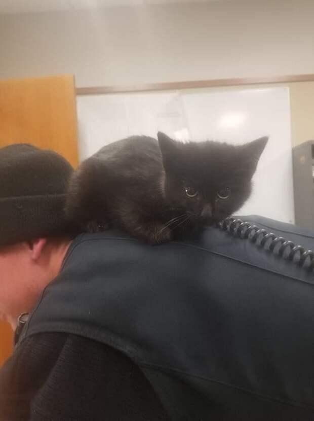 Котенок сидит на спине