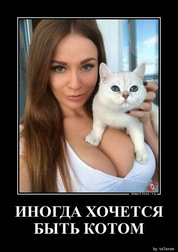ИНОГДА ХОЧЕТСЯ БЫТЬ КОТОМ » Demotions.ru - ДЕМОТИВАТОРЫ.