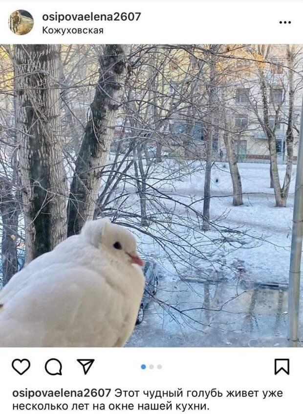 Голубь регулярно прилетает к окну женщины / скриншот из группы ВКонтакте