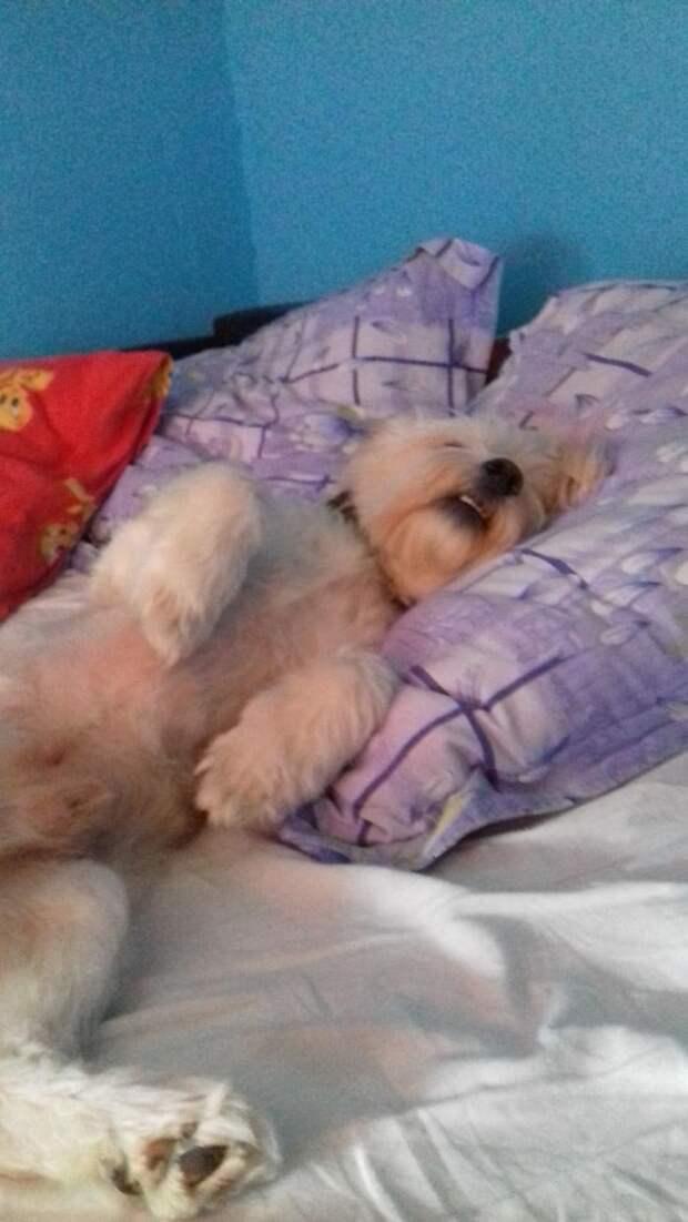 20 смешных собак, которые ведут себя прямо как люди