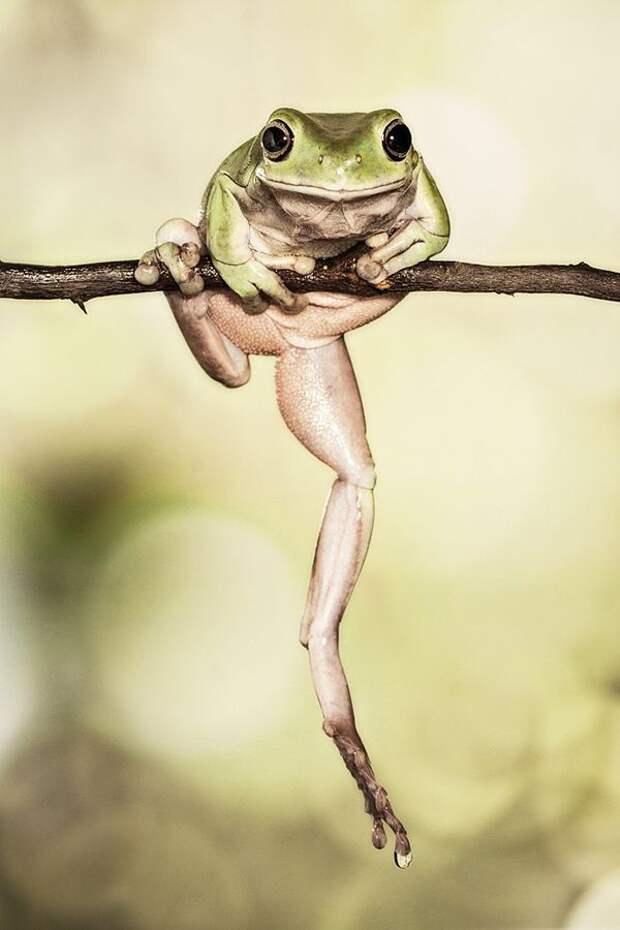 Frogs05 Оригинальные лягушки