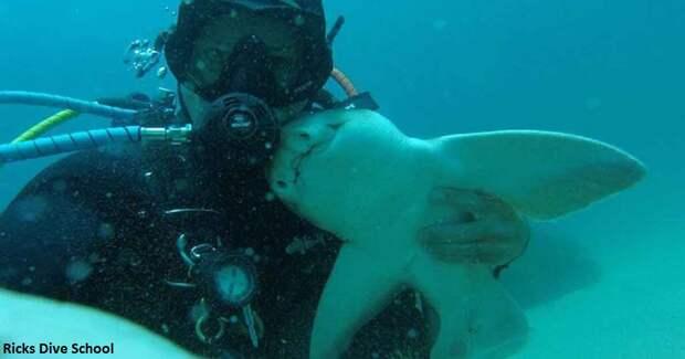 Человек и акула дружат уже 7 лет. Вот их фото и история