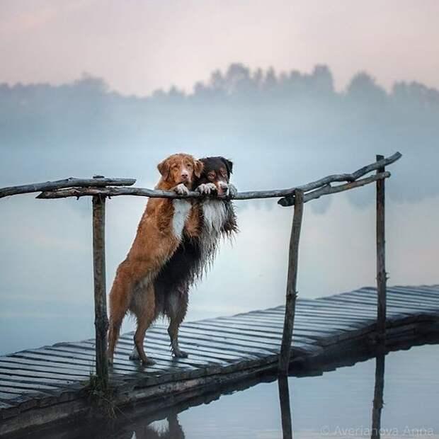 Для позитива на душе жизнь, фото, эмоции