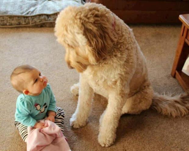 дети должны расти с домашними животными (18)