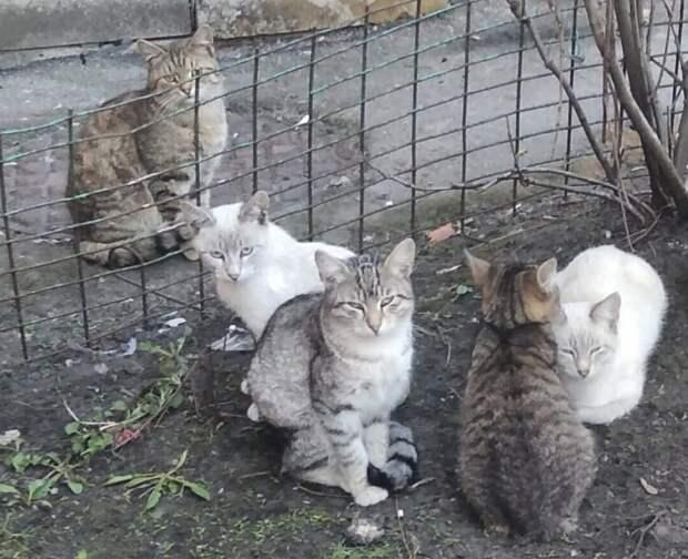 Эти малыши никому не нужны... А председатель агрессивен, грозится перетравить всех в этих дворах. Помогите, хотя бы временно.
