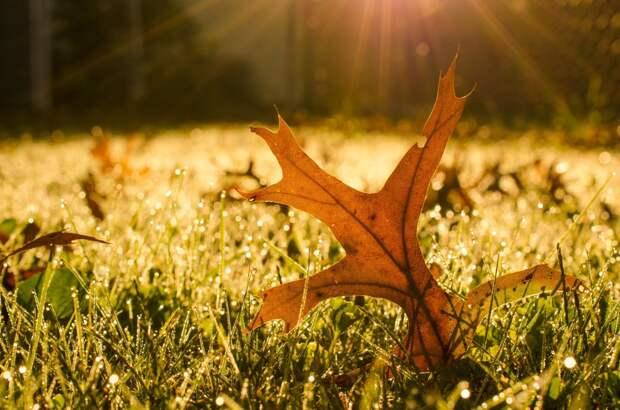 NewPix.ru - Fall Leaf in Morning Sun автор PI Photography and Fine Art - Delaware Photographer