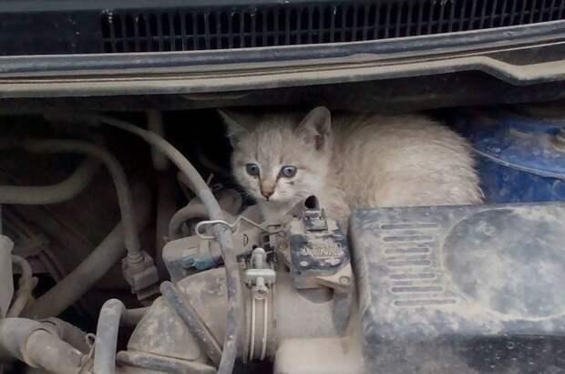 Кошки хотя бы не грызут там ничего авто, автомобиль, живность под капотом, неожиданная встреча, неожиданно, неожиданность, под капотом