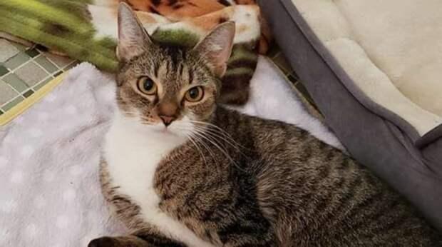 Мужчина спас кошку, которая несмотря на свой дефект выживала на улице