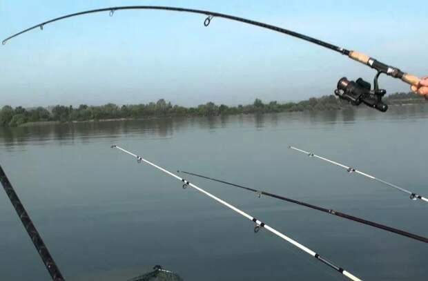 С 16 мая разрешена ловля определенного вида рыбы