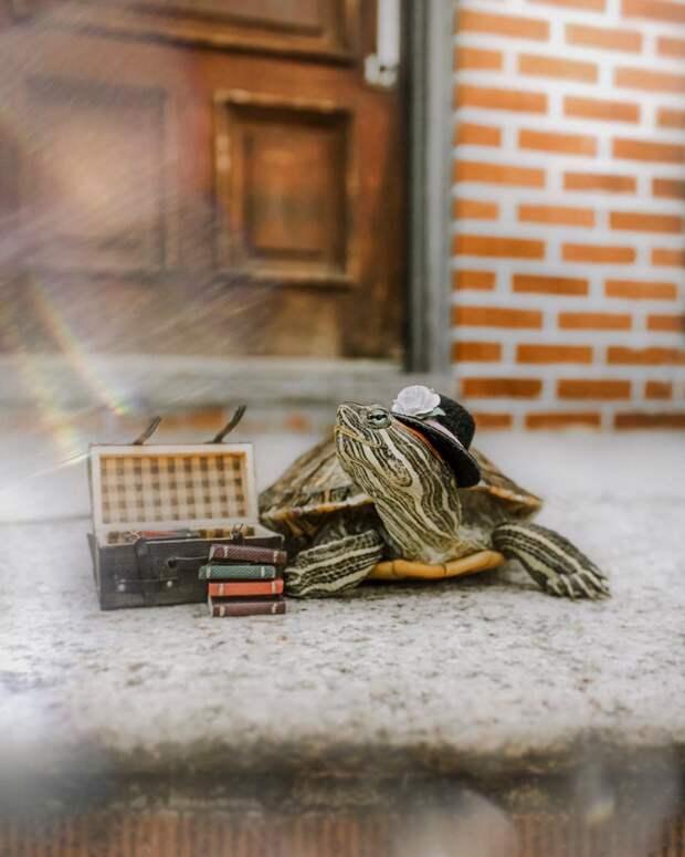 За приключениями пары черепах наблюдают тысячи поклонников