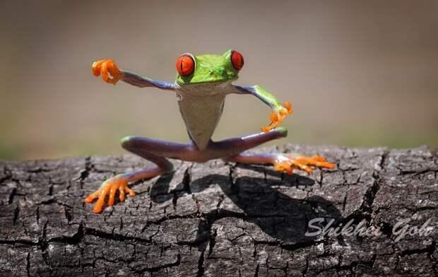 Frogs07 Оригинальные лягушки