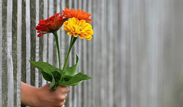 Три тюльпана в целлофане: ростовчанам рассказали, как подорожали цветы за год