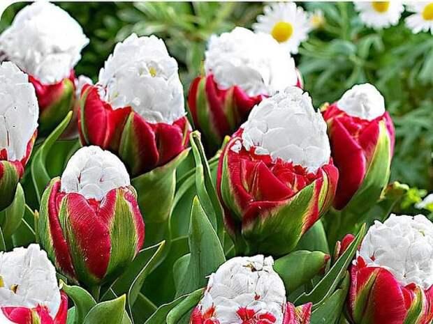 Пять причин посадить луковичные растения на даче