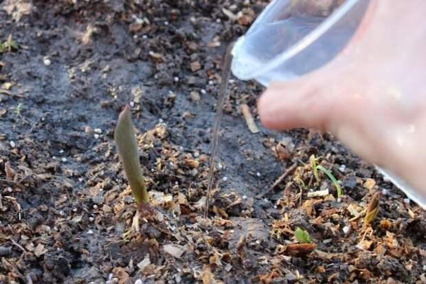 рука с пластиковым стаканчиком