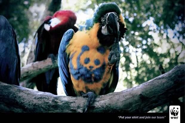 WWF: Arara, WWF, Creative Child Studios , World Wide Fund for Nature, Печатная реклама