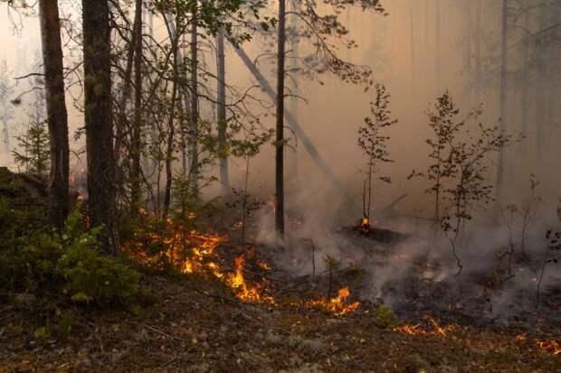 В России за сутки потушили 81 лесной пожар — Авиалесоохрана