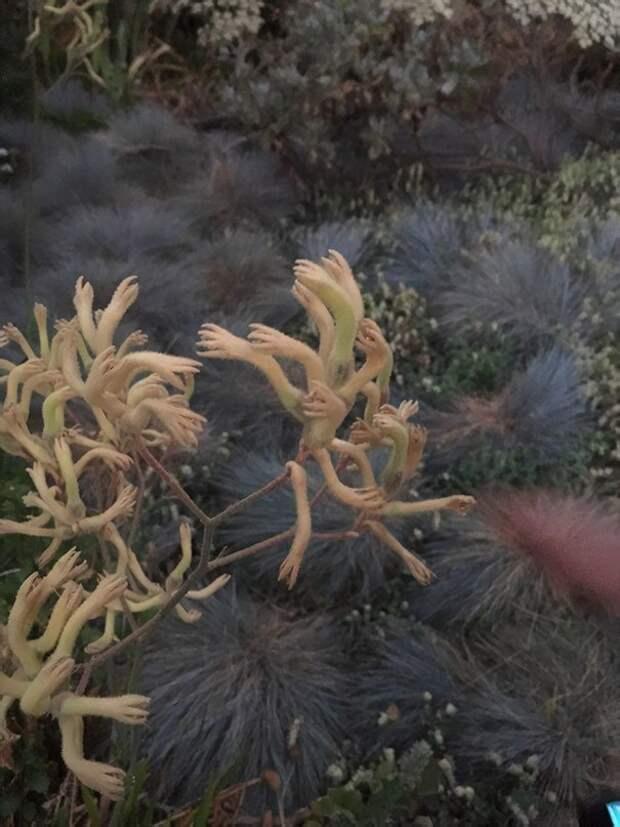 20. Причудливое растение животные, мир, подборка, природа, ужас, фото, явление