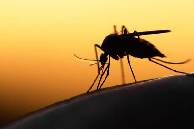 В Британии создали миллионную армию комаров-мутантов и готовы выпустить ее на волю, чтобы посмотреть, что из этого получится