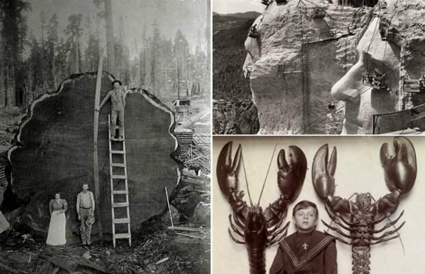 Исторических фотографий гигантских вещей.