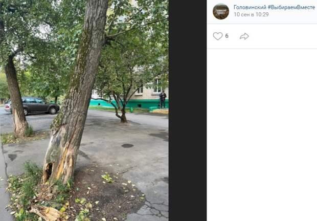 Дерево на Флотской исследовали дендрологи