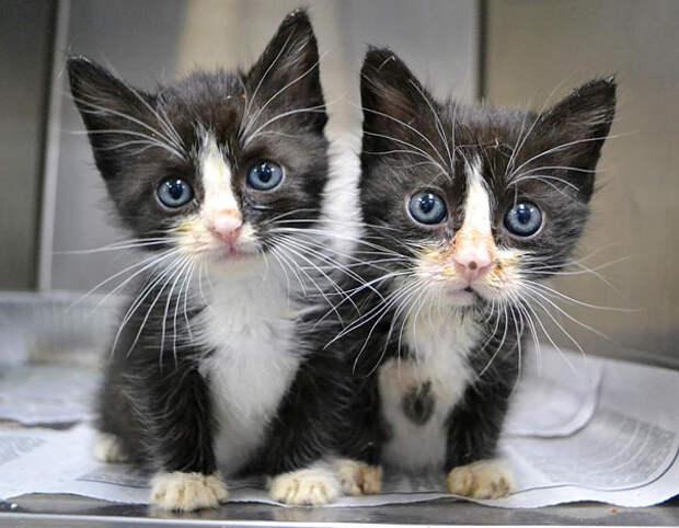 Животные-близнецы - 25 очаровательных фото-8