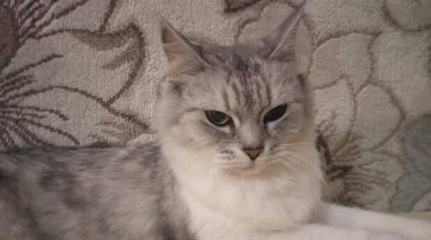 Кошка, оставшись без хозяйки, похудела и затосковала… К счастью, она попала в хорошие руки!