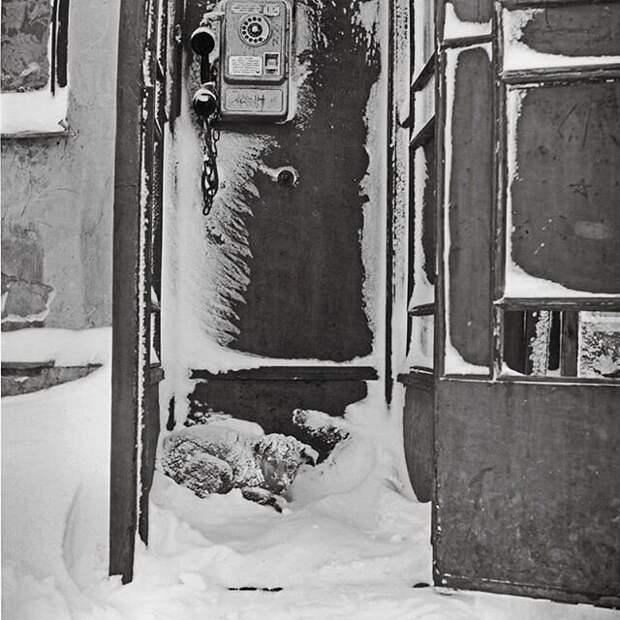 Парень из Риги вдыхает жизнь в старые советские фото, заставляя их двигаться