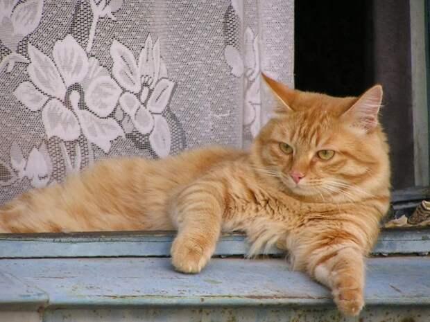 Кошка настойчиво царапалась в дверь загоревшегося дома, пока хозяева не открыли