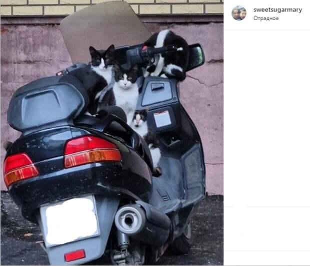 Фото дня: коты в Отрадном оккупировали скутер
