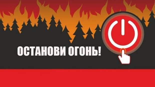 Минприроды Крыма объявляет старт выставки работ конкурса «Вместе сохраним леса от пожаров»