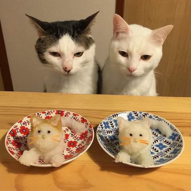 Вы тоже чуете подвох, сударь? дегустация, еда, животные, кот, коты, позитив, реакция, юмор