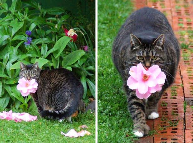 18 представителей семейства кошачьих, которые растопят сердце даже заядлого собачника