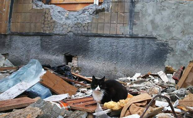 Котят и кошек забивали палками, рубили лопатой