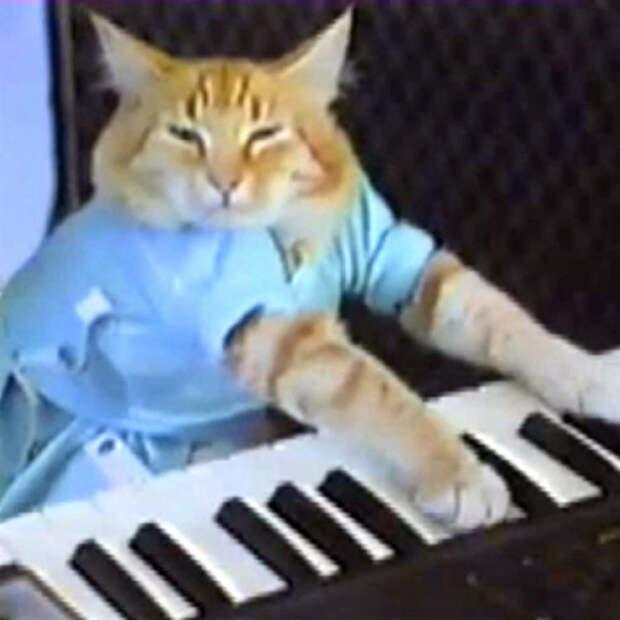 Еще четыре мема продали на криптоаукционе. Среди них – Grumpy Cat