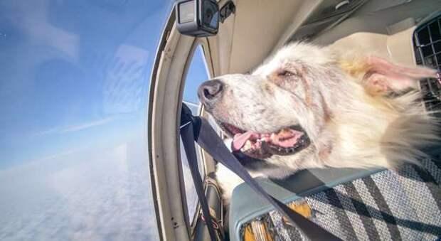 собака на борту самолета