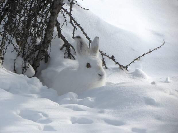 Зайцев из Куркина накормят в Алешкинском лесу