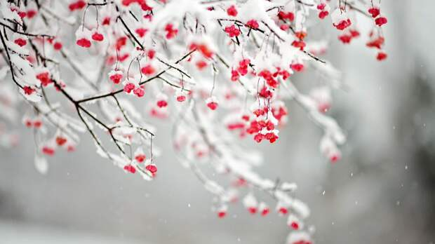Зима, зима, зима...