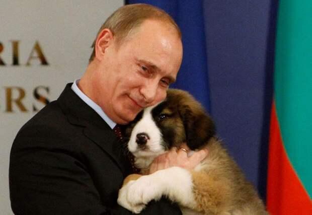 Путин со щенком Каракачанской овчарки, которого ему подарил премьер-министр Болгарии Бойко Борисов, София, 13 ноября 2010 года.
