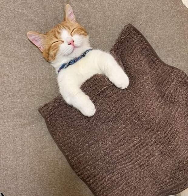 Очаровательный котик, который спит на спине, покорил Сеть!
