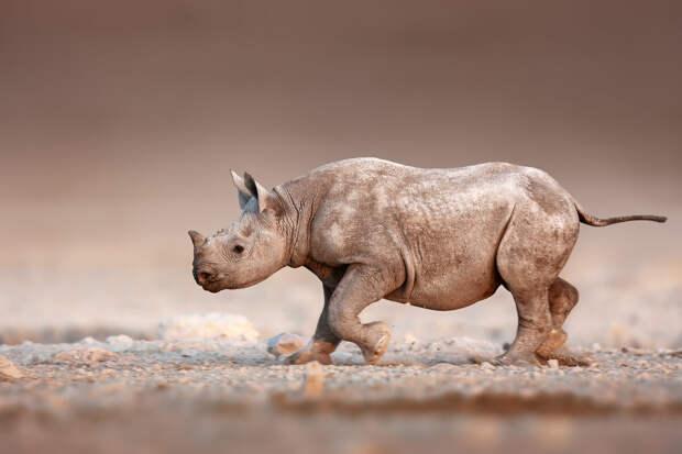 13 редких фото животных, которые вызовут улыбку, радость и удивление