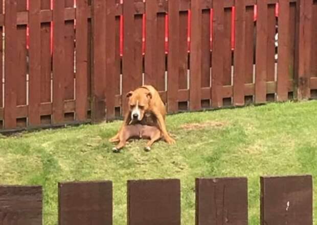 20+ собак, которые забыли, что они собаки, и вспоминать не собираются