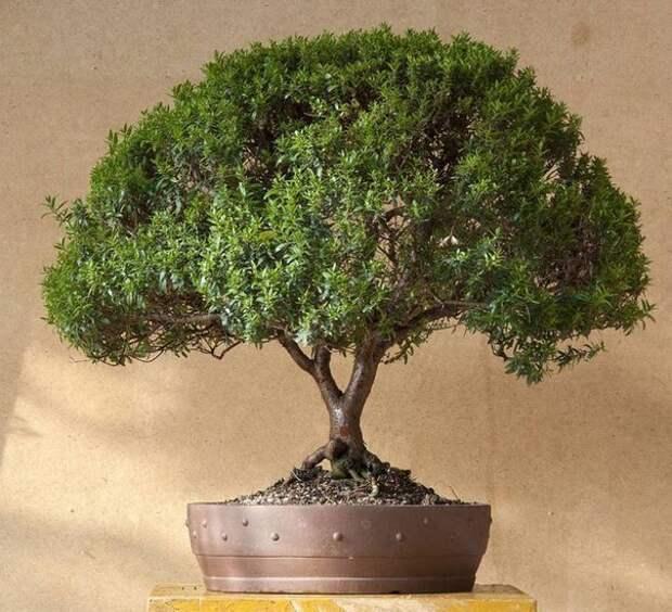 ТОП - 5 Полезные растения для вашего дома