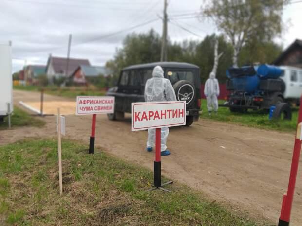 Условный очаг АЧС будут искать в Ленинском районе Ижевска