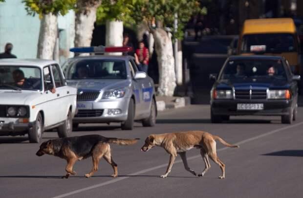 На дорогу выскакивает собака - рассказываю, как поступил.
