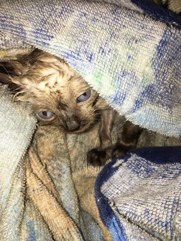 Нас убеждали, что котика проще усыпить, а иначе придётся мириться с потерей...