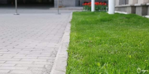Вытоптанный газон во дворе на Авиаконструктора Миля восстановлен — Жилищник