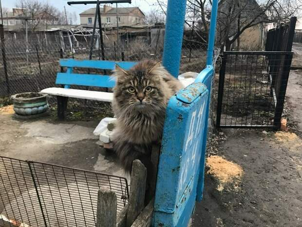Ждёт почту город, домашние животные, забор, кот, кошка, село, улица, эстетика