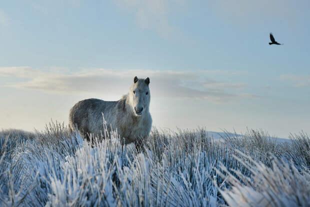 Добрый дикий конь в Белфасте, Северная Ирландия